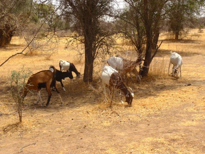 Famine Tchad
